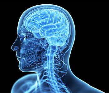 рак головы шеи